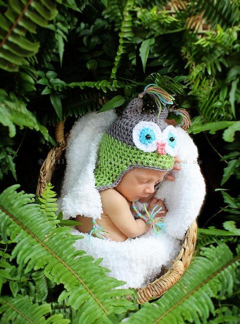 bush owl