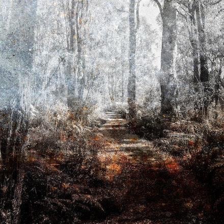 Forest Mist - Some work on a forest image outside of Jarradale WA