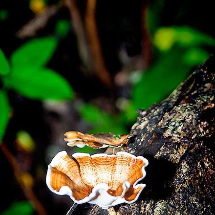 Fungi in the Jungle - Long Hai Mountains, Sth Vietnam