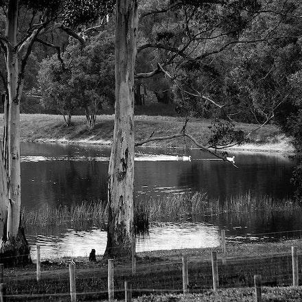 Manjimup Lake v2