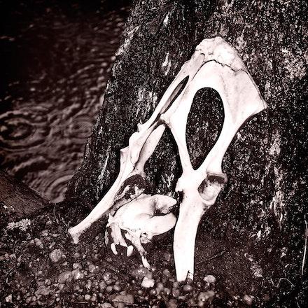 Bones - OLYMPUS DIGITAL CAMERA