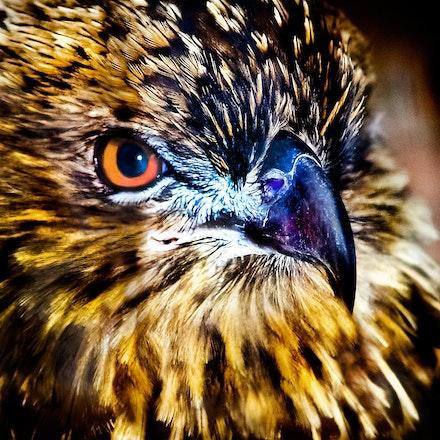 Young_Hawk - OLYMPUS DIGITAL CAMERA