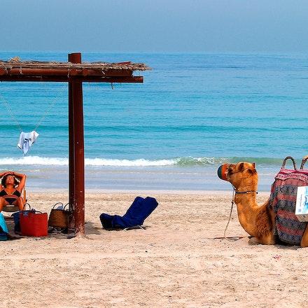 Chillin_On_A_Dubai_Beach - OLYMPUS DIGITAL CAMERA