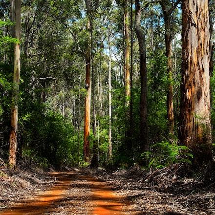 Jarra Forest - Near Pemberton, SW Western Australia