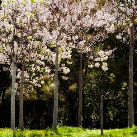 Pemberton Orchard