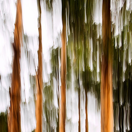 Steaky Gums - Gum trees in movement