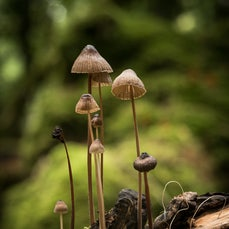 Macro forest - When minor is major! all the small things.. fungi, moss, insects, details, etc...