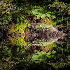 Reflection Abstracts - perfect river reflections abstracted