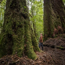 Tarkine - Takayna - The richly diverse wilderness region in Tasmania that is Takayna. (Tarkine)