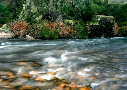 Murray River, Tom Groggin, Kosciuszko National Park, NSW/VIC