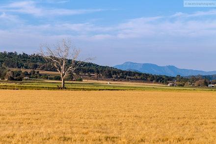Field, Scenic Rim, QLD - Taken along the Boonah - Fassifern Road.