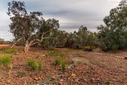 The Paroo River, Currawinya National Park, QLD.