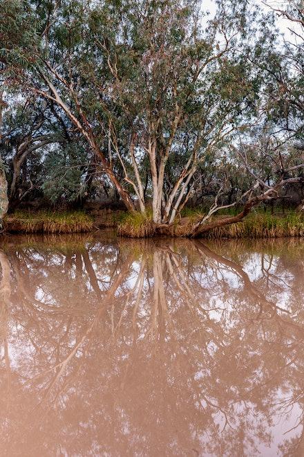 Paroo River reflections, Currawinya National Park, QLD.