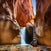 Kanarra Creek, Peach Canyon, Utah
