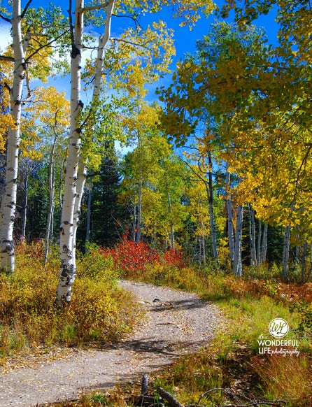 Steamboat autumn road