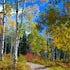 Autumns Road Less Traveled