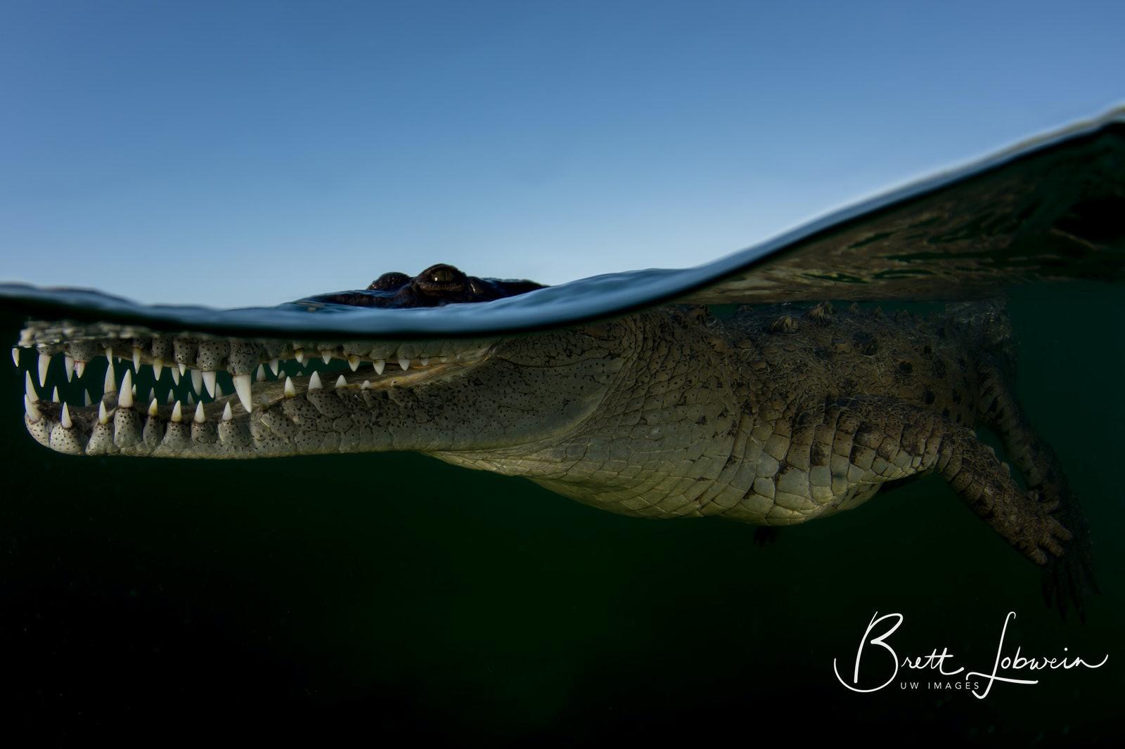 Croc Waterline