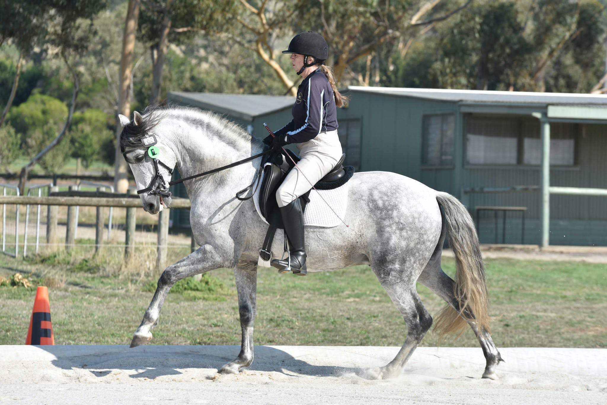 Mustad Saddlery Geelong Mid week Dressage | Mane Memories Photography