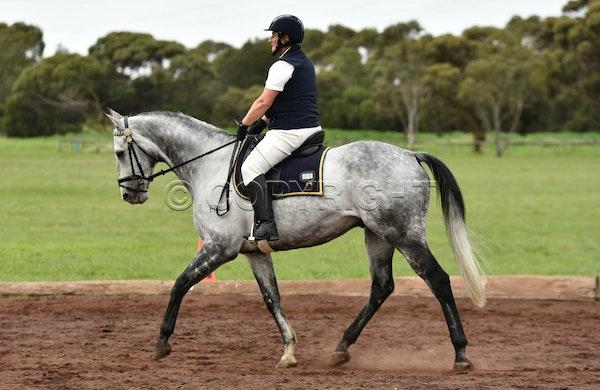 Mustad Saddlery Geelong Mid week Dressage | Mane Memories Photography