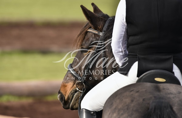 Galleries | Mane Memories Photography