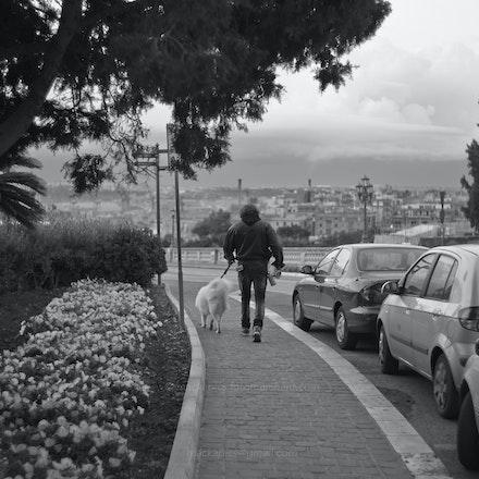 Valletta dogwalker