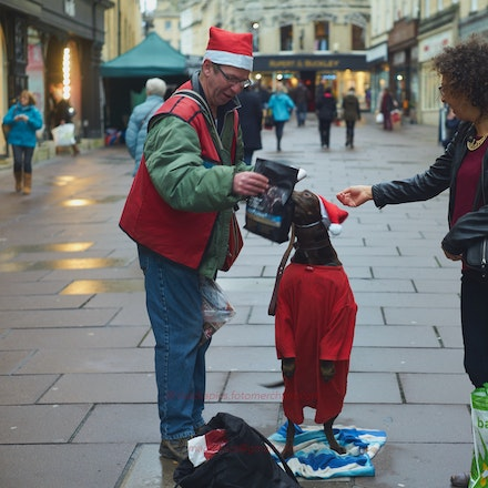 Big Issue seller's dog at Christmas - Bath, Somerset