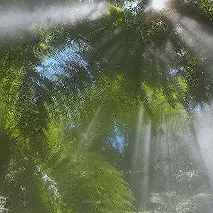 Misty Rainforest Mist - Australian National Botanic gardens