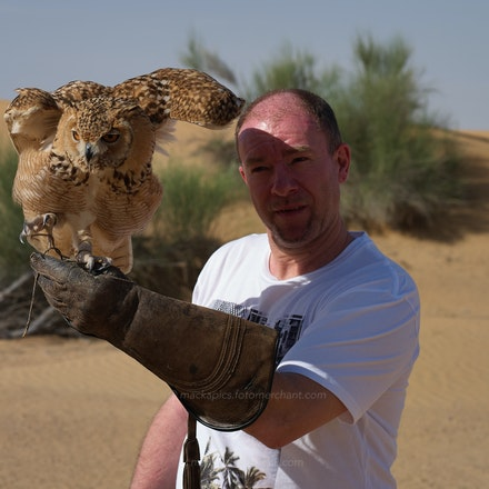 'Cersei' the Desert Owl - Dubai Desert Conservation Reserve, 25 Mar 2016