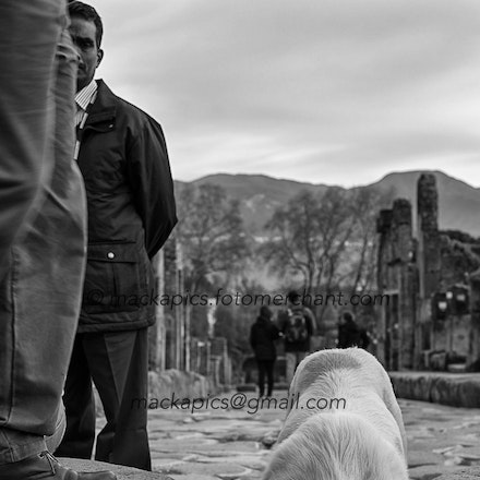 What have the Romans ever done for me? - Pompeii in winter: a resident stray dog drinks from a chariot rut.