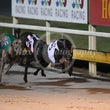 Albion Park 27 04 17 - Photos taken by Michael McInally and Toby Coutts