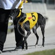 Albion Park 30 04 17 - Photos Taken By Toby Coutts & David McInally