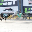 Albion Park 03 05 17 - Photos Taken By Toby Coutts