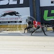 Albion Park 17 05 17 - Photos Taken By Toby Coutts