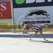 Albion Park 31 05 17 - Photos Taken By Toby Coutts