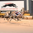 Albion Park 01 06 17 - Photos Taken By Michael McInally & Toby Coutts