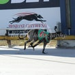 Albion Park 07 06 17 - Photos Taken By Toby Coutts