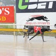 Albion Park 14 06 17 - Photos taken by Toby Coutts