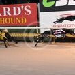 Albion Park 15 06 17 - Photos taken by Michael McInally, Toby Coutts, David McInally