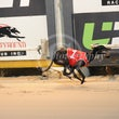 Albion Park 19 06 17 - Photos Taken By Toby Coutts