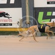 Albion Park 02 07 16 - Photos Taken By Toby Coutts