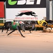 Albion Park 17 07 17 - Photos taken by Michael McInally and Toby Coutts