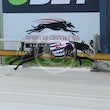 Albion Park 19 07 17 - Photos Taken By Toby Coutts