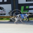 Albion Park 02 08 17 - Photos taken by Toby Coutts