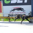 Albion Park 09 08 17 - Photos Taken By Toby Coutts