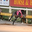 Albion Park 10 08 17 - Photos taken by Michael McInally and Toby Coutts