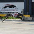 Albion Park 23 08 17 - Photos Taken By Toby Coutts