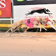 Albion Park 14 09 17 - Photos taken by Michael McInally