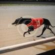 Race 4 Lady Olvira