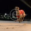 Race 7 Bralyn Amy
