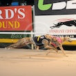 Albion Park 23 10 17 - Photos Taken By Toby Coutts